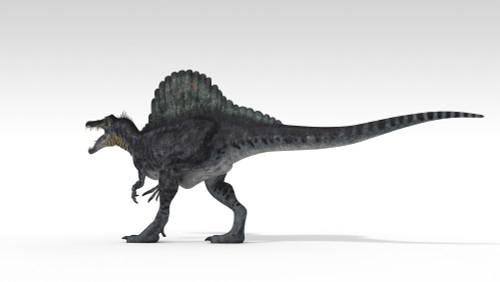 Spinosaurus dinosaur, white background Poster Print - Item # VARPSTKVA600763P