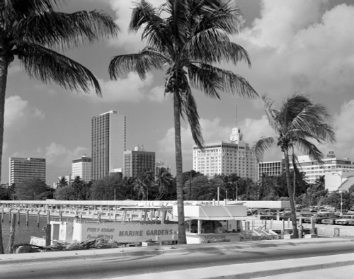 1970s Sightseeing Boat At Pier Day Light Skyline Palm Trees Miami Florida Usa Print By Vintage Collection - Item # PPI178886LARGE
