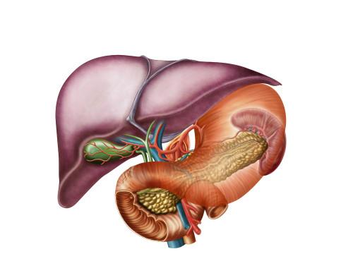 Anatomy of liver, antero-visceral view Poster Print - Item # VARPSTSTK700195H