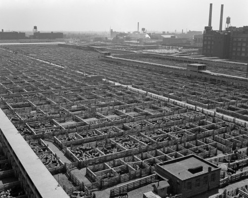 1950s Aerial View Of Cattle Pens At The Union Stock Yard & Transit Company Chicago Il Usa Print By Vintage Collection - Item # PPI179062LARGE