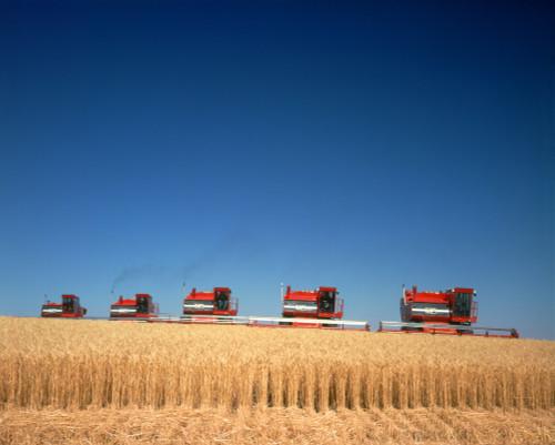 1970s Five Massey Ferguson Combines Harvesting Wheat Nebraska Usa Poster Print By Vintage Collection (22 X 28) - Item # PPI177446LARGE