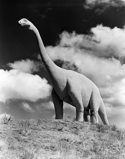 1950s Life-Size Statue Of Extinct Long Neck Gigantic Brontosaurus Dinosaur Park Established 1936 Rapid City South Dakota - Item # PPI179022LARGE