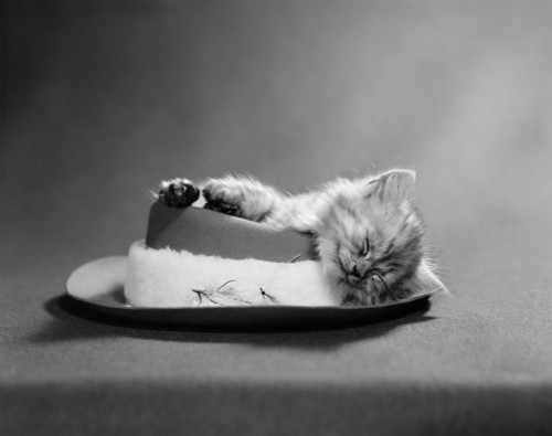 1960s Cat Curled Up And Asleep On An Angler'S Hat With A Sheepskin Band And Fishing Flies Print By Vintage Collection - Item # VARPPI177702