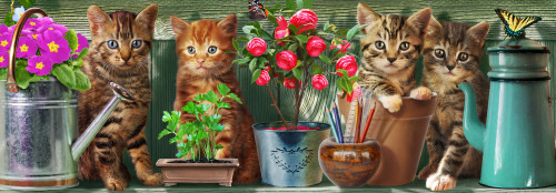 Kitchen Cats Poster Print by Adrian Chesterman - Item # VARMGL225001