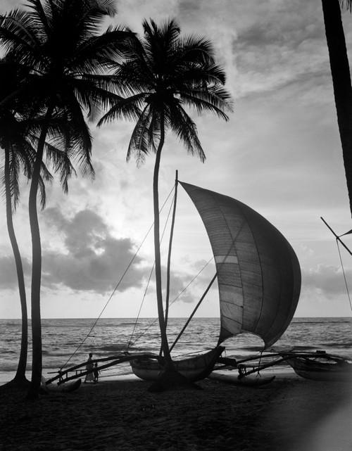 1930s Single Catamaran On Tropical Beach At Sunset Palm Trees Sri Lanka Poster Print By Vintage Collection - Item # VARPPI195642