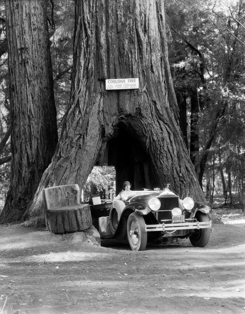 1930s Woman Driving Convertible Car Through Opening In Giant Sequoia Tree Trunk Coolidge Tree Mendocino California Print - Item # VARPPI179617