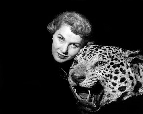 1950s Dramatic Face Shot Woman Looking At Camera Posing With Fierce Stuffed Leopard Head Print By Vintage Collection - Item # VARPPI177388