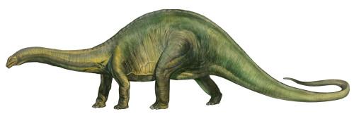 Brontosaurus, a prehistoric era dinosaur from the Jurassic period Poster Print - Item # VARPSTSKR100102P