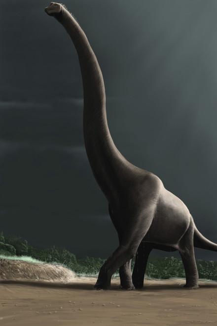 Brachiosaurus in a prehistoric landscape Poster Print - Item # VARPSTMDE100005P
