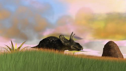 Triceratops walking across a grassy field Poster Print - Item # VARPSTKVA600203P