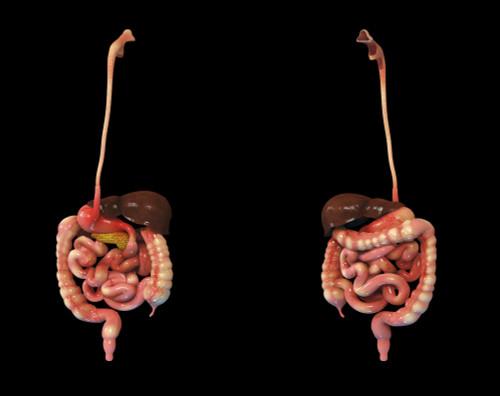 3D rendering of human digestive system Poster Print - Item # VARPSTSTK701158H