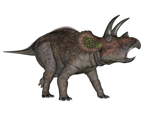 Triceratops dinosaur, white background Poster Print - Item # VARPSTEDV600213P