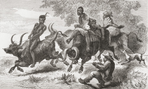 Khoisan Natives Riding Pack Oxen In Africa In The 19Th Century. From Africa By Keith Johnston, Published 1884. PosterPrint - Item # VARDPI1958152