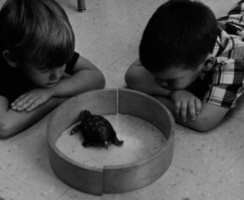 Two boys observing turtle Poster Print - Item # VARSAL255424931