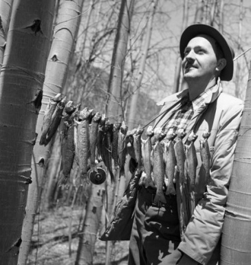 Fisherman with row of fish hanging between trees Poster Print - Item # VARSAL255421177