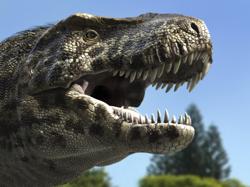 Detailed headshot of Tyrannosaurus Rex. Tyrannosaurus rex was a carnivore dinosaur that lived during the late Cretaceous Period in North America Poster Print - Item # VARPSTRNG600008P