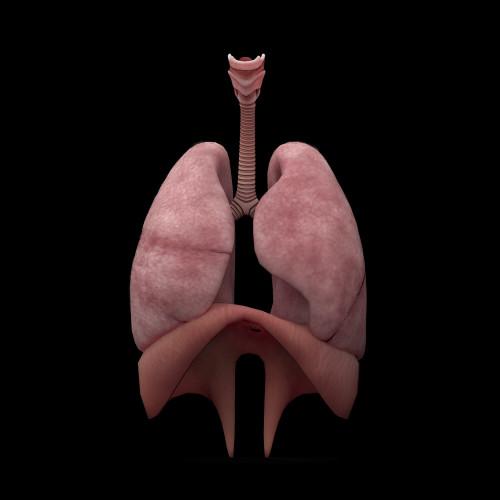 3D rendering of human lungs Poster Print - Item # VARPSTSTK701162H