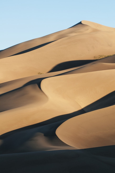 Sand dunes in morning light, Great Sand Dunes National Park; Colorado, United States of America PosterPrint - Item # VARDPI12291322