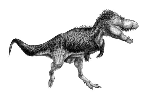 Black ink drawing of Albertosaurus sarcophagus. Albertosaurus sarcophagus was a tyrannosaurid theropod from the Late Cretaceous of North America. Poster Print - Item # VARPSTVNK600002P