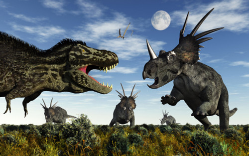A herd of Styracosaurus dinosaurs confronting a carnivorous Tyrannosaurus Rex during the Cretaceous period Poster Print (8 x 10) - Item # MINPSTMAS100640P