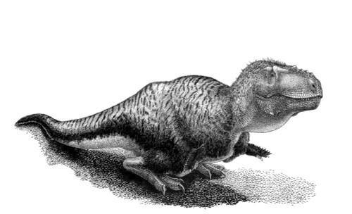 Black ink drawing of Tarbosaurus bataar. Tarbosaurus bataar was a tyrannosaurid theropod, closest relative of Tyrannosaurus rex, from the Late Cretaceous of Mongolia Poster Print - Item # VARPSTVNK600017P