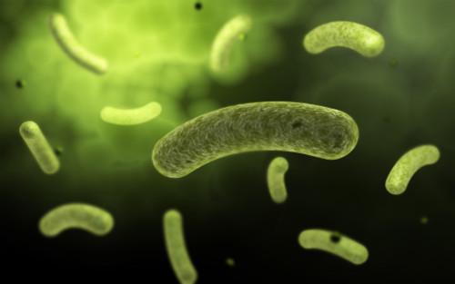 Conceptual image of common bacteria Poster Print - Item # VARPSTSTK700016H