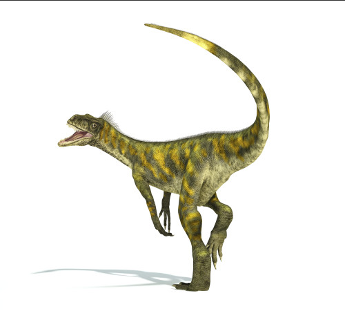 Herrerasaurus dinosaur on white background with drop shadow Poster Print - Item # VARPSTVET600075P