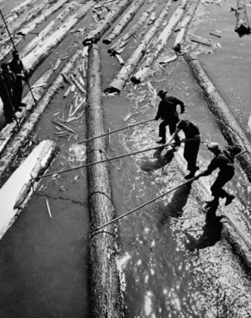 High angle view of three lumberjacks pulling logs out from water Poster Print - Item # VARSAL25535082