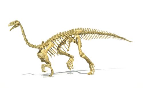 3D rendering of a Plateosaurus dinosaur skeleton, perspective view Poster Print - Item # VARPSTVET600032P