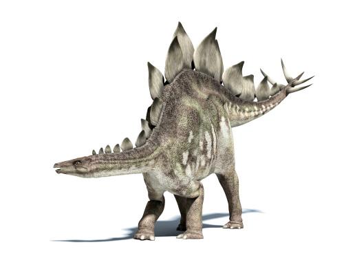 3D rendering of a Stegosaurus dinosaur Poster Print - Item # VARPSTVET600012P