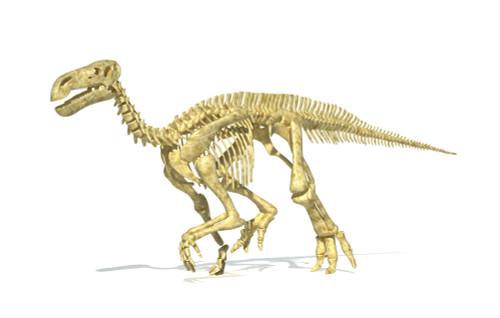 3D rendering of an Iguanodon dinosaur skeleton, perspective view Poster Print - Item # VARPSTVET600028P