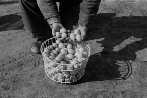 Low section of man with basket of eggs Poster Print - Item # VARSAL255423934
