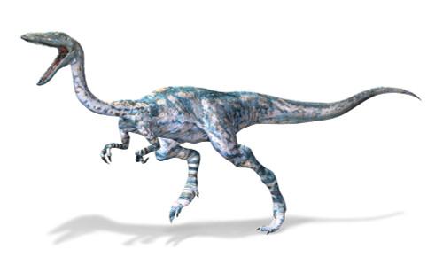 3D rendering of a Coelophysis dinosaur Poster Print - Item # VARPSTVET600003P