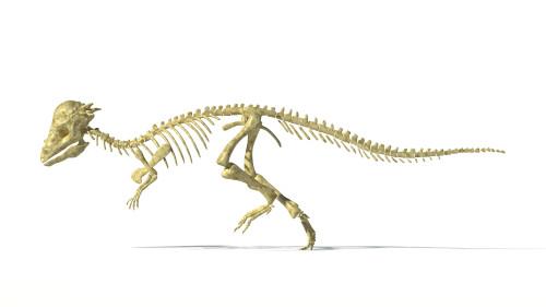 3D rendering of a Pachycephalosaurus dinosaur skeleton, side view Poster Print - Item # VARPSTVET600030P