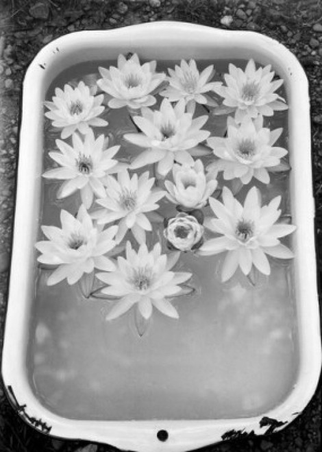 Vessel with water lily flowers in frozen water Poster Print - Item # VARSAL255416325