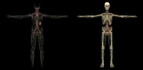 3D rendering of human lymphatic system Poster Print - Item # VARPSTSTK701169H