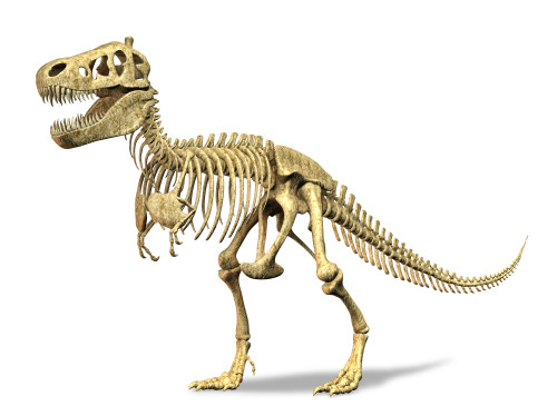 3D rendering of a Tyrannosaurus Rex dinosaur skeleton. T-Rex was one of the largest carnivorous dinosaurs of the Cretaceous period Poster Print - Item # VARPSTVET600037P