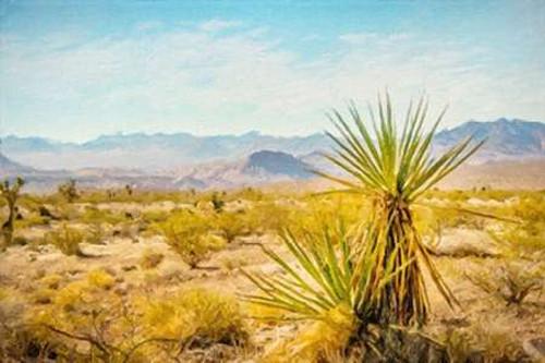 Utah Desert Yucca Poster Print by Ramona Murdock - Item # VARPDXRM1694