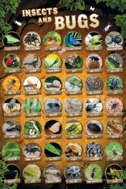 Insects And Bugs Compilation Poster Poster Print - Item # VARIMPST5516R