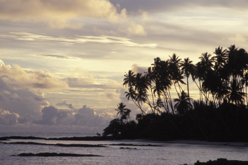 Silhouetted Palm Trees Over Beach At Sunset PosterPrint - Item # VARDPI1886121