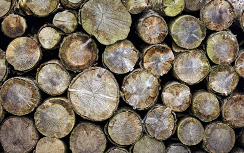 Group Of Logs PosterPrint - Item # VARDPI1837905