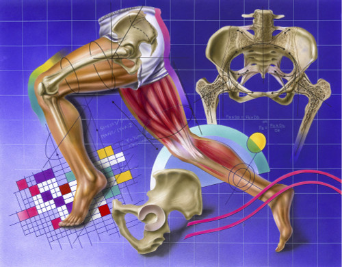 Schematic showing hip and leg motion. Poster Print by TriFocal Communications/Stocktrek Images - Item # VARPSTTRF700062H