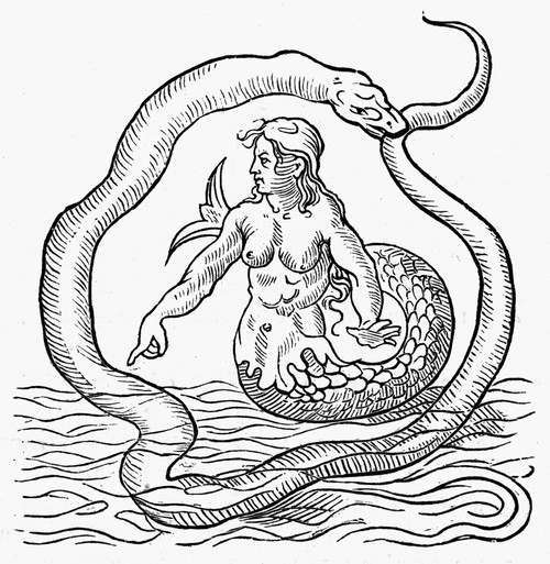 Mermaid, 1542. /Nmermaid. Woodcut From Alciati'S 'Emblemata,' Mid 16Th Century. Poster Print by Granger Collection - Item # VARGRC0096288