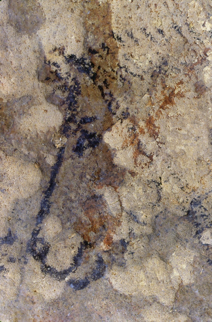 Cave Art: Horse. /Nhead Of A Horse, Painted In Black Outline. Detail From The Grand Ceiling Of The Rouffignac Cave, Dordogne, France, C11,000 B.C. Poster Print by Granger Collection - Item # VARGRC0167858