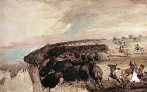 Miller: Buffalo Hunt. /Nnative American Hunters Of The Great Plains Driving Herds Of Buffalo Over A Precipice. Watercolor, 1867, By Alfred Jacob Miller. Poster Print by Granger Collection - Item # VARGRC0172736