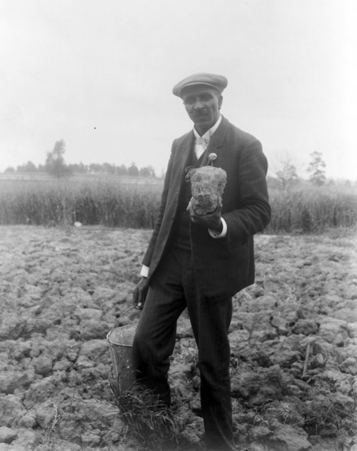 George Washington Carver /N(1864-1943). American Botanist, Chemist, And Educator. Photographed At The Tuskegee Institute By Frances Benjamin Johnston, 1906. Poster Print by Granger Collection - Item # VARGRC0351525