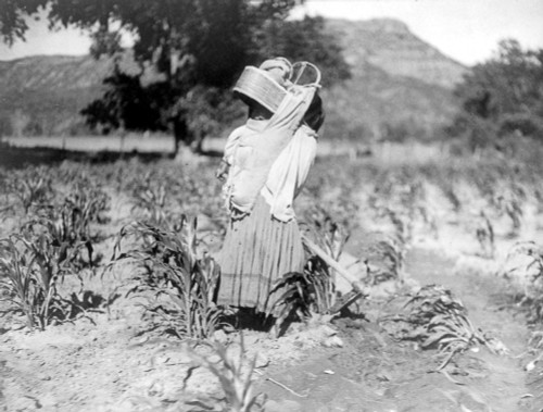 Apache Woman & Child, C1906. /Nan Apache Woman Hoeing Rows Of Corn, Carrying An Infant In A Cradleboard With A Large Visor. Photograph By Edward Curtis, C1906. Poster Print by Granger Collection - Item # VARGRC0114266