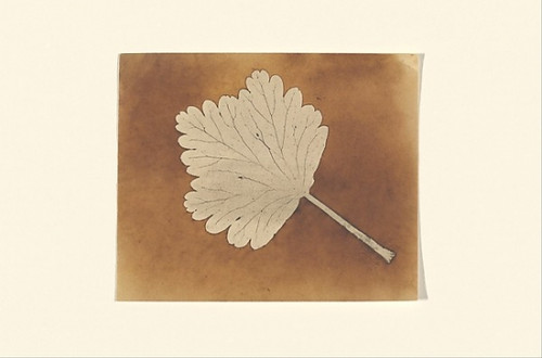 "[Leaf] Poster Print by William Henry Fox Talbot (British  Dorset 1800  ""1877 Lacock) (18 x 24) - Item # MET285951"