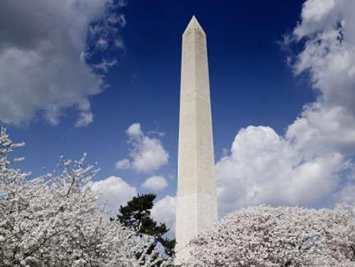 Washington Monument and cherry trees, Washington, D.C. Poster Print by Carol Highsmith - Item # VARPDX463233