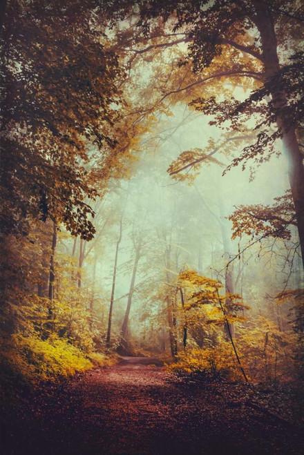 Silent Forest Poster Print by Dirk Wuestenhagen - Item # VARPDXW893D